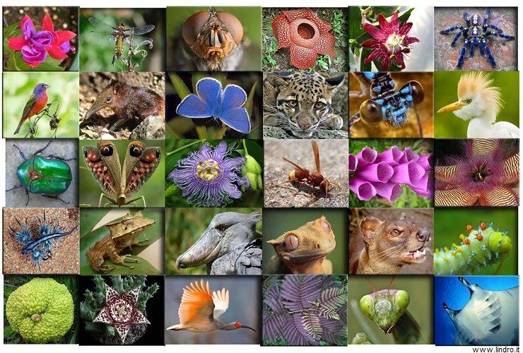La biodiversità perde pezzi