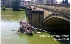 Trasporto dei detriti arborei nei corsi d'acqua